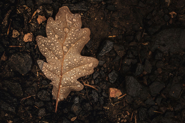 Wet autumn leaf on the ground Leaf Autumn Water Drops On Leaves EyeEm Selects EyeEm Best Shots Backgrounds Full Frame Autumn Mood