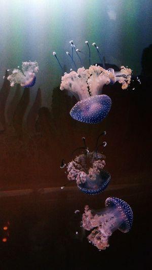 Zoo Rostock Zoo Underwater Sea Life Swimming Water Quallen