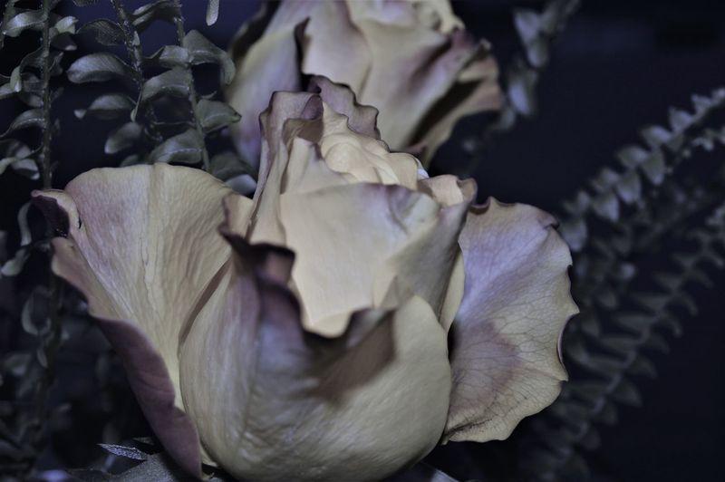 Best EyeEm Shot Bestsellers Blumen Hochzeitsfotografie Liebe ❤ Nature Photography Schönheit Schönheit Der Natur Wellness Best Eyeem Photo Bestseller EyeEm Bestsellers Blumenpracht🌺🍃 Blumenstrauß Blütenblatt Blütenzauber Duft First Eyem Photo Gelbe Rosen Hochzeit Rose - Flower Rosen
