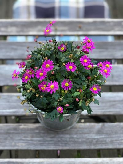 Flowering Plant Flower Plant Fragility Vulnerability  Freshness Beauty In Nature Growth Day Nature No People Focus On Foreground Potted Plant Outdoors Close-up Flower Head Flower Pot