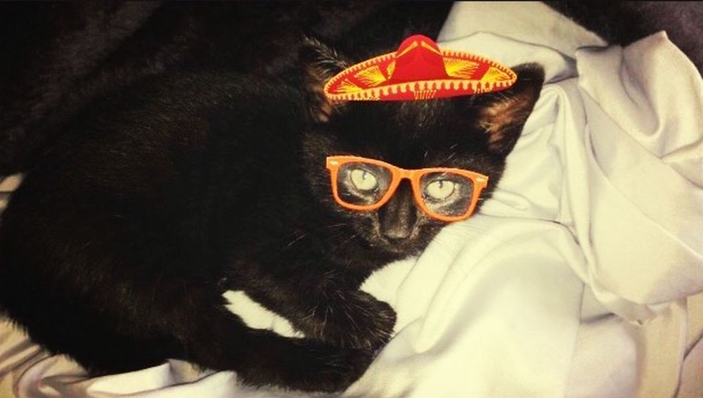 This kitty is all about the fiesta Kitten Cat Cute Animal