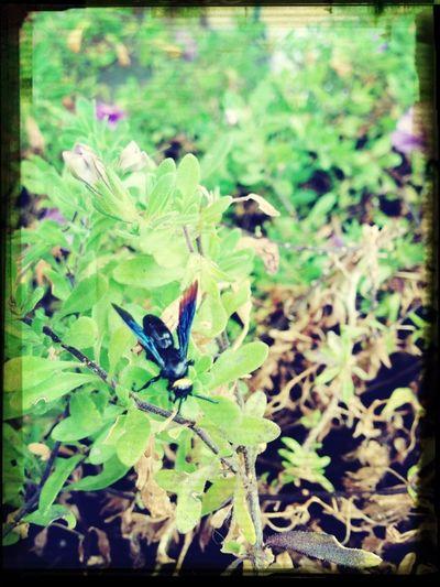 Interesting Bug