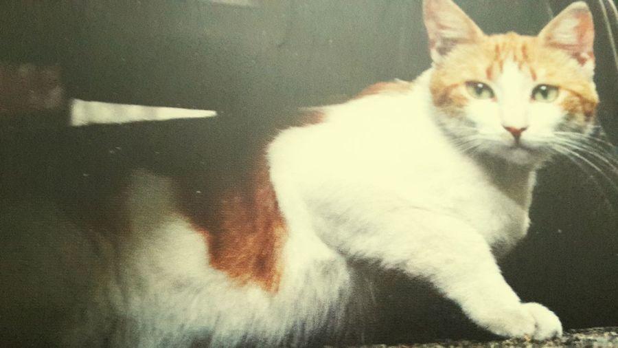 Enjoying Life Waiting Traveling Hello World Enjoying Nature Cat♡ Love