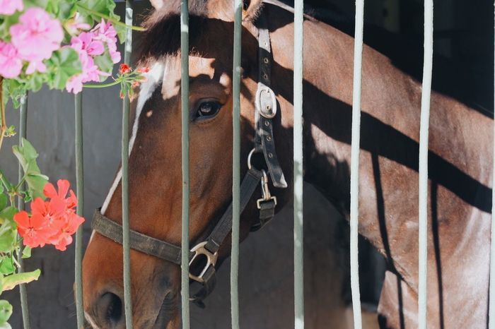 Horse Domestic Animals Animal Themes Mammal One Animal No People Day Outdoors Livestock Flower Close-up