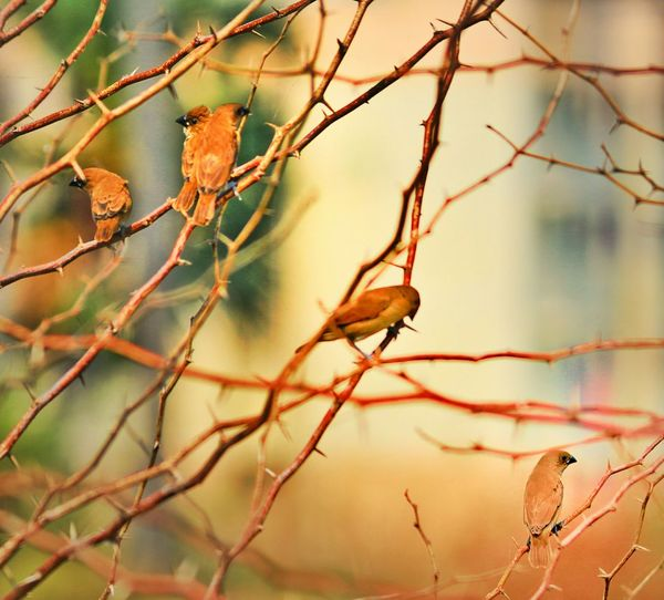 Bird buddies... Hello World Gudnite EyeEm !! .. Enjoying Life Taking Photos Eyem Best Shots Eye4photography  EyeEm Masterclass Eyem Birds Luvphotography Check This Out