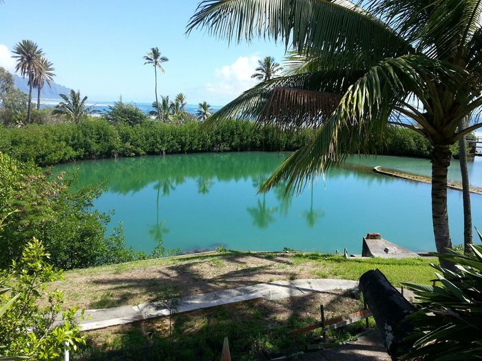 Aloha World Gilligan's Island Coconut Island Swimming Pool Learning HistoryWalking Around