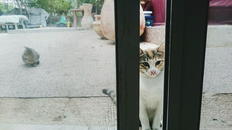 Cat That's Me Hi! Predator Catz Relaxing Door Step Tao