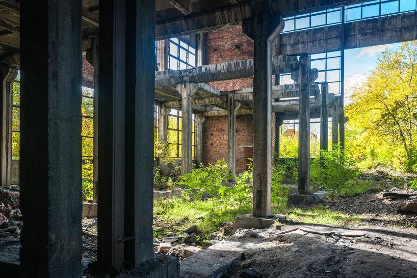 Abandoned Plant Industrial Decay Plants Nature Triumph Novokuznetsk Kuzbass Siberia Russia Creative Light And Shadow
