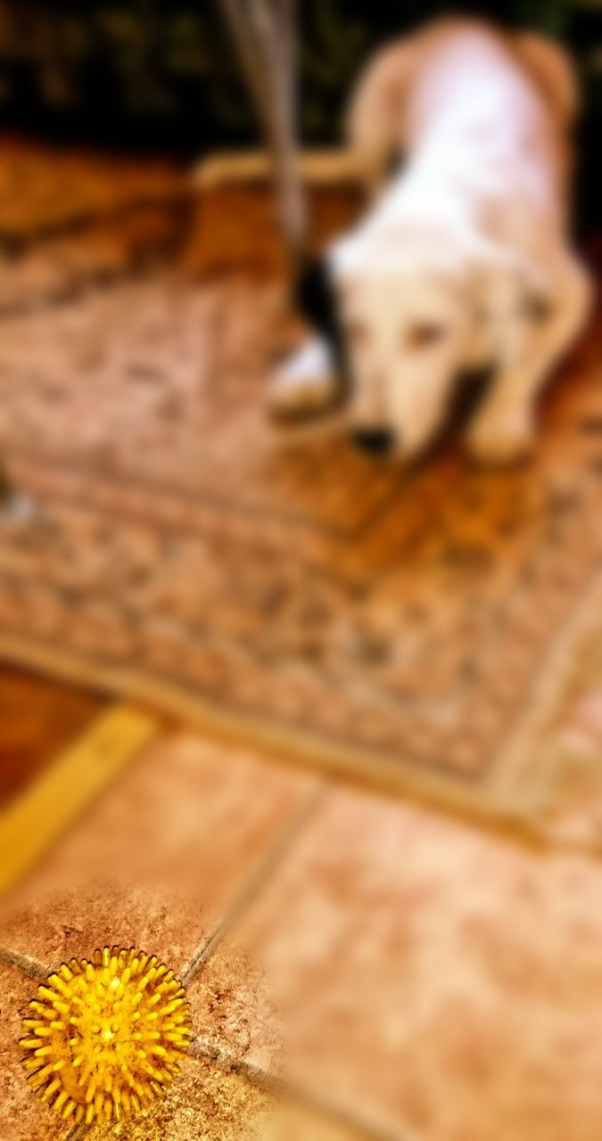 pets, one animal, selective focus, domestic animals, dog, animal themes, mammal, no people, close-up, nature, day, outdoors