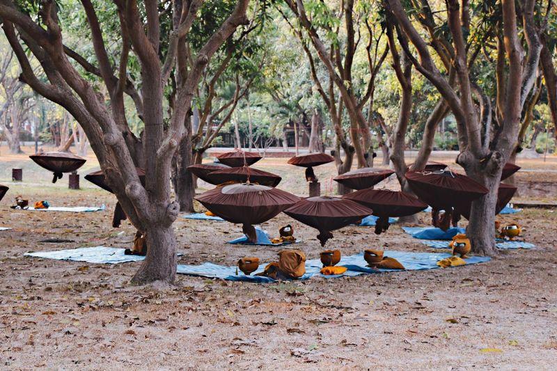 Thailand Thai Thailandtravel Sukothai Trees Lightthroughtrees Campsite Buddhism Monks Monk Campsite Spiritual Place Culture Culture Of Thailand