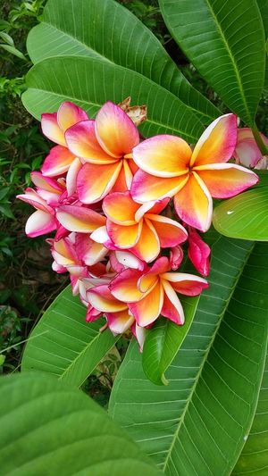 flower Leaf Beauty In Nature Flower Growth Pink Color