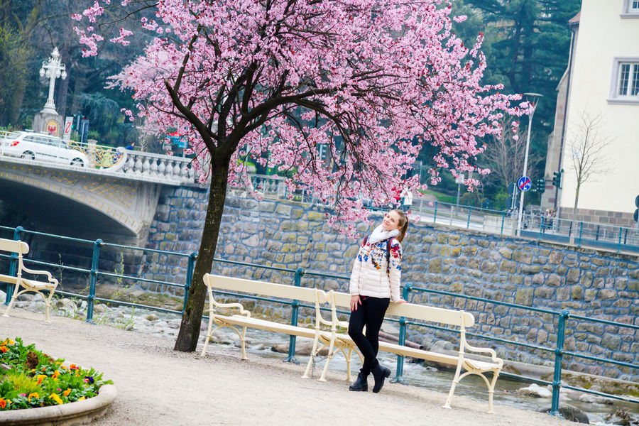 young beautiful woman sitting near wonderful tree Day Garden Girl Girl In Flowers Meran Meran 2000 Merano Nature One Person One Woman Only Outdoors People Real People Rose Flower Nature Red Rose Tree Sky Tree Tree Woman