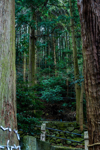 Green Color Japan Japan Photography Beauty In Nature Day Forest Nature No People Outdoors Tree Tree Trunk
