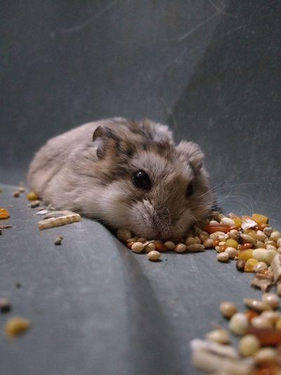 Hedgehog Sea Life Portrait Aquatic Mammal Close-up Hamster Rodent Rat Whisker
