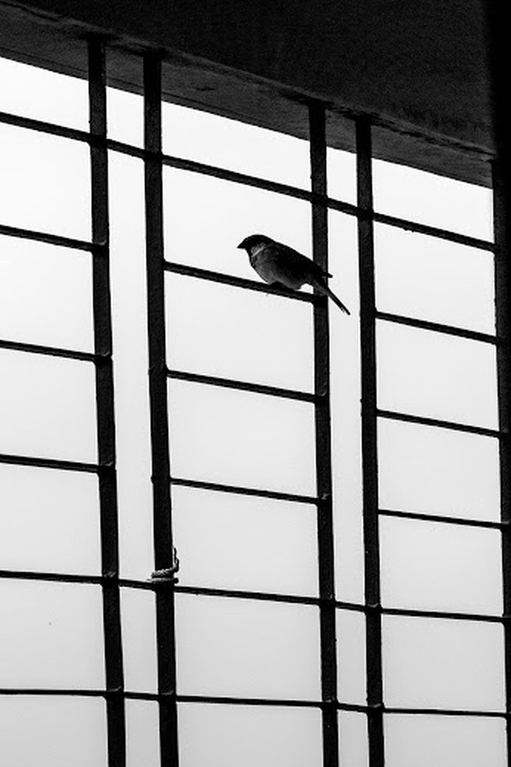 bird, indoors, animal themes, wildlife, animals in the wild, one animal, low angle view, silhouette, window, day, pole, no people, perching, glass - material, transparent, close-up, side view, full length, built structure