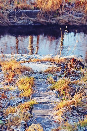 #christmastime #frosty #river #sun Grass Nature No People Outdoors