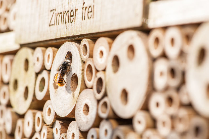 Backgrounds Bee Hotel Bienenhotel Close-up Day Full Frame Large Group Of Objects No People Outdoors Springtime Vacancies Wild Honey Bee Wood - Material Zimmer Frei