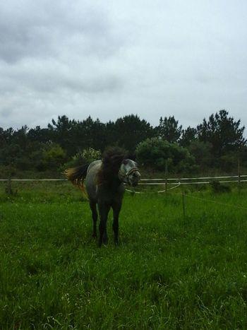 Horse Cavalos Cavalo