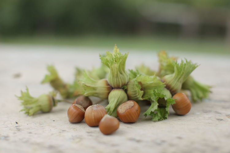 Close-up of hazelnuts and flowers on wood