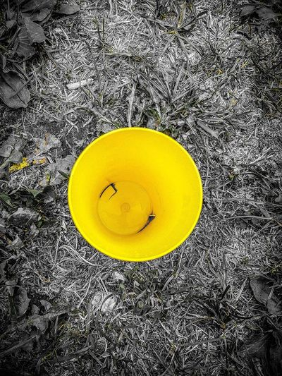 High angle view of yellow flower on field