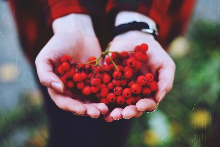 Close-up of woman hand holding berries outdoors