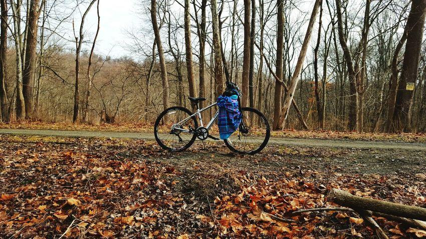 WPT Beauty In Nature WPT Bikelife Pennsylvania Trail Outdoors Bike Ride Biking Nature New Bike Bike Color Colors Jacket