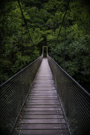 View of footbridge in forest