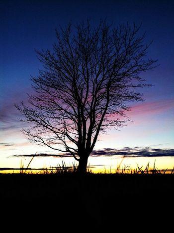 Sunsets Sunset Sillouette Life Is A Beach EyeEm Best Shots - Sunsets + Sunrise Sunset