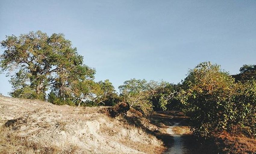 Into the woods . . . . . . Vscocam VSCOPH VSCO Nature Feedfiller Siquijorisland Siquijor The Great Outdoors With Adobe