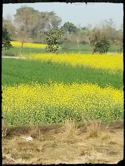 Here's the Basant Basant Flower_time Spring
