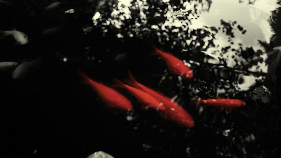 Mirror Sea Life