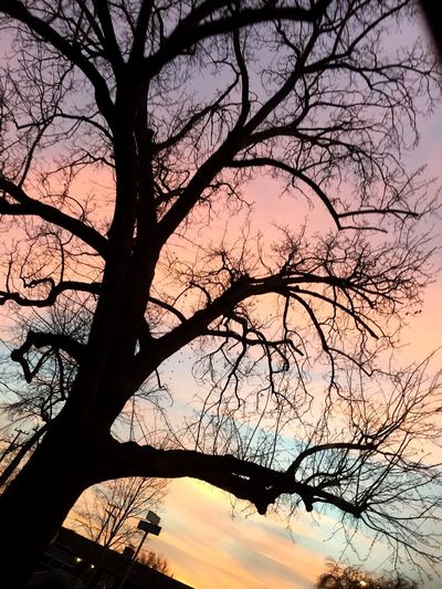 Spooky Trees Pastel Sky Beautiful Day Check This Out One Of My Favorites