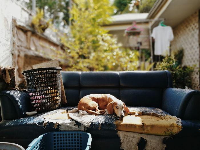 Dog lying on sofa in yard