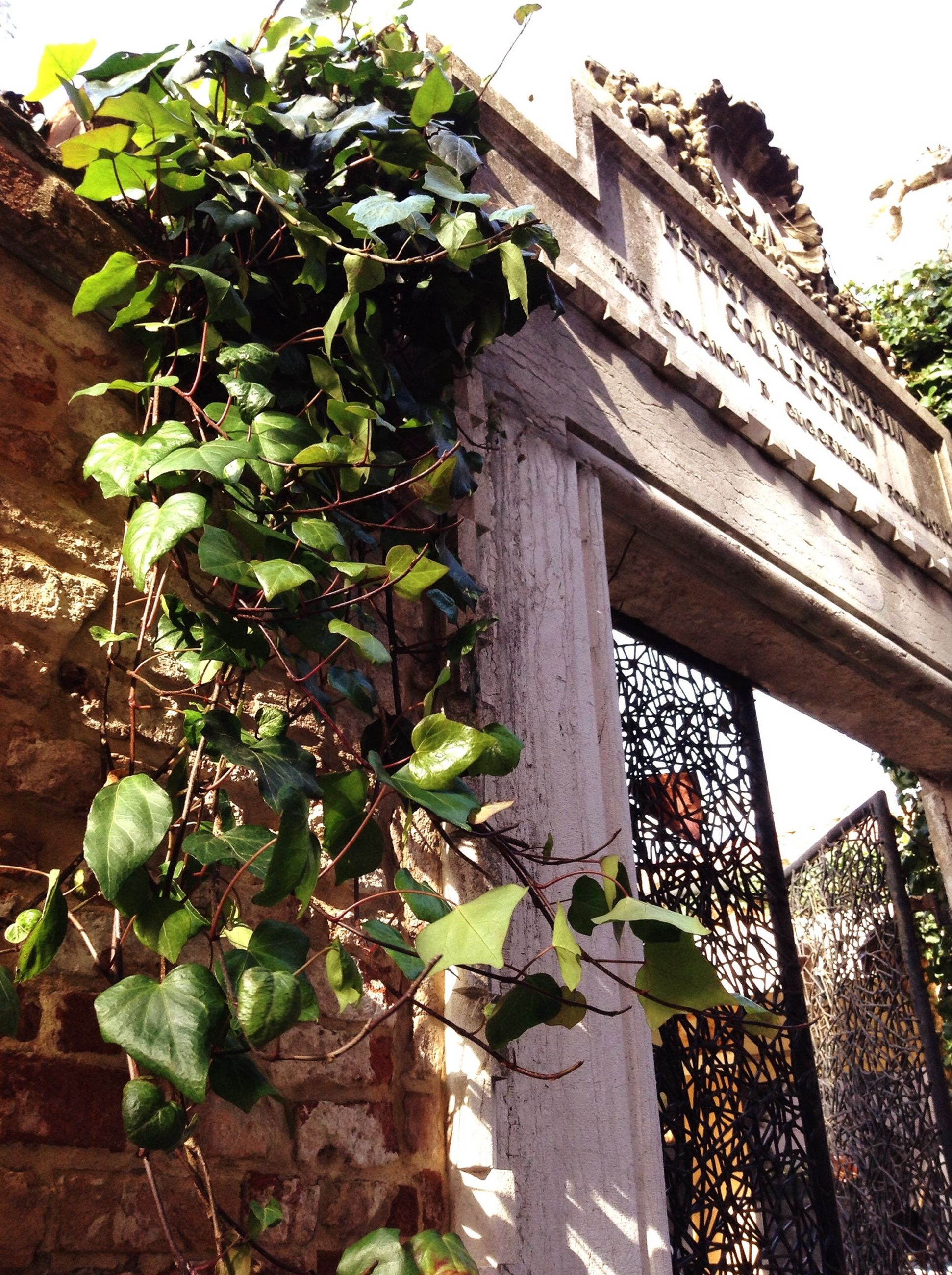 plant, built structure, architecture, building exterior, leaf, growth, potted plant, green color, low angle view, house, wall - building feature, front or back yard, growing, day, outdoors, ivy, no people, sunlight, residential structure, nature