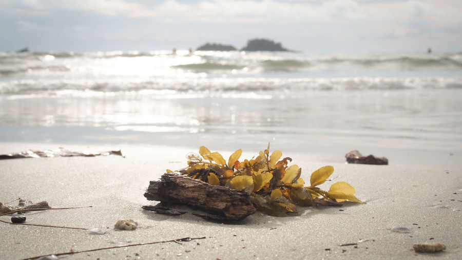 Close-up of yellow leaves on beach