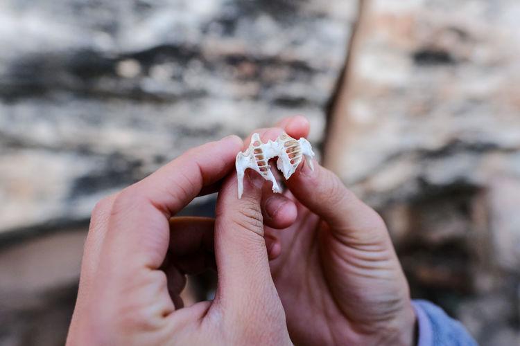 Close-up of hand holding bone