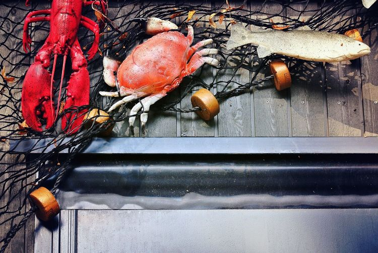 High angle view of dead fish and crab on boat