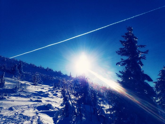 Nature Tree Outdoors Beauty In Nature Sky No People Day Space Landscape Forest Mountain Range Mountain Travel Snow Winter Cold Temperature Blue PhonePhotography Shades Of Winter