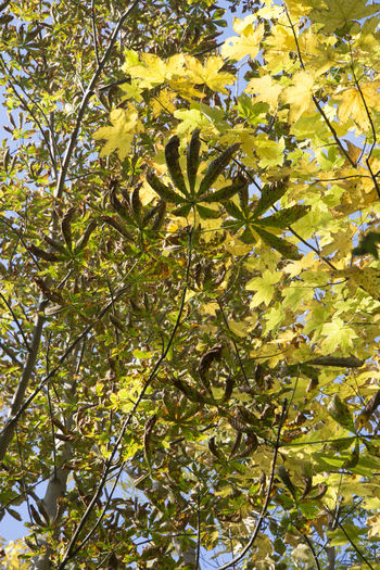 Amager Fælled Autumn Autumn Leaves Horse Chestnut Tree Nature Urban Nature Leaves Maple Tree No People Sunlight Tree