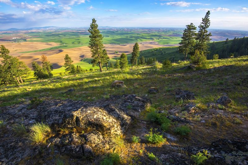 Kamiak Butte looking out on the Palouse, Idaho, and Washington. Landscape_Collection Landscape Landscape_photography Pullman Outdoor Photography Outdoors Hikingadventures Whataview Icanseemyhousefromhere