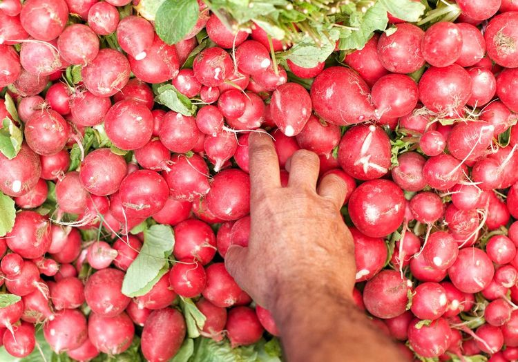 Close-up of hand holding red radish vegetables in market stall