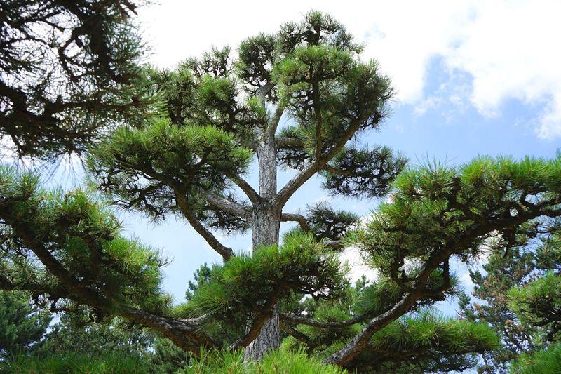 Pune Tree Park