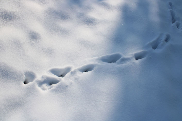 High angle view of snow on land
