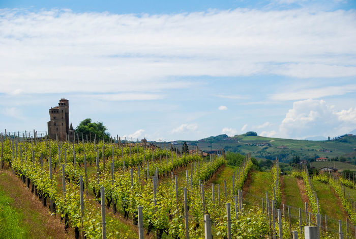 Agriculture Alba Barolo Countryside Field Green Hills Italy Land Landscape Langa Langhe Natural Nature Nebbiolo No People Non-urban Scene Piedmont Italy Rural Scene Tourist Resort Vineyard Viticulture Wine Winemaking Winery
