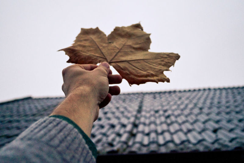 Cropped Image Of Person Holding Dry Maple Leaf By House Against Sky