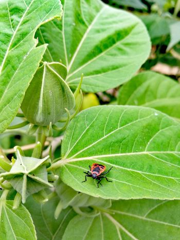 Ladybug Leaf Insect Close-up Animal Themes Green Color Plant