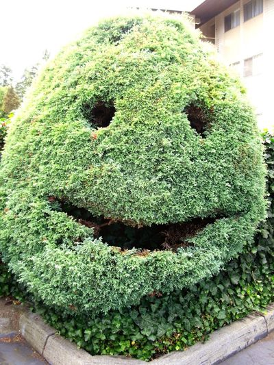 Face topiary in back yard