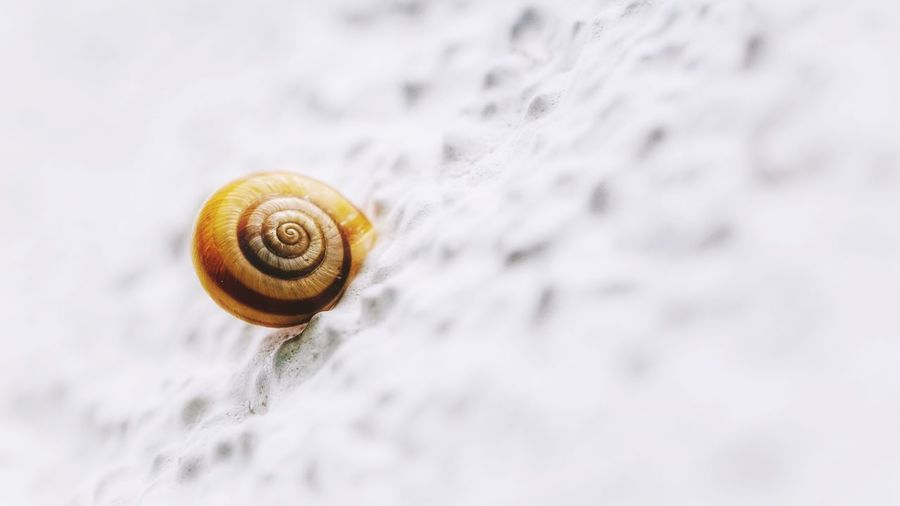 Close-up of snail on white wall