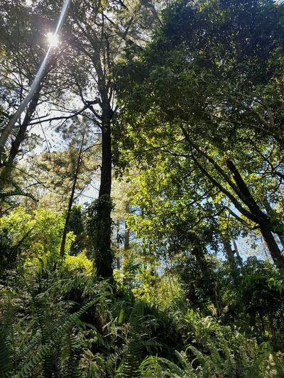 Forrest Tree Nature No People Green Color Tranquility Tropical Paradise Elsalvadorimpresionante ElSalvador  ElVolcan Volcano Sunny Day 🌞 Sunny Weather