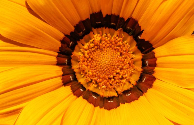 Extreme close-up of orange flower pollen